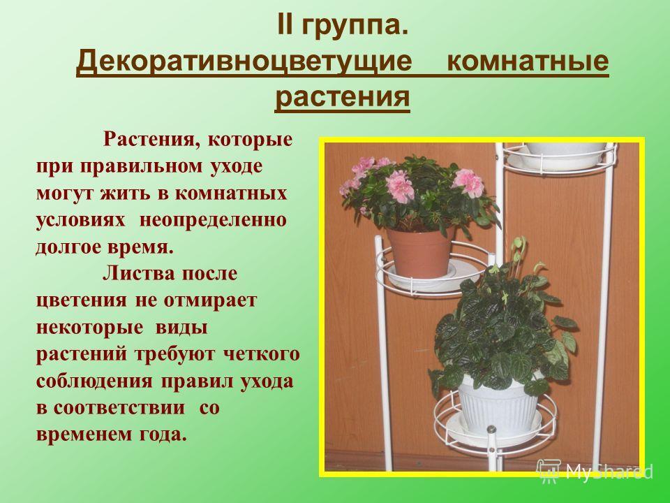 II группа. Декоративноцветущие комнатные растения Растения, которые при правильном уходе могут жить в комнатных условиях неопределенно долгое время. Листва после цветения не отмирает некоторые виды растений требуют четкого соблюдения правил ухода в с