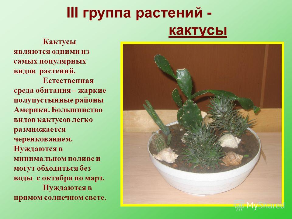 III группа растений - кактусы Кактусы являются одними из самых популярных видов растений. Естественная среда обитания – жаркие полупустынные районы Америки. Большинство видов кактусов легко размножается черенкованием. Нуждаются в минимальном поливе и