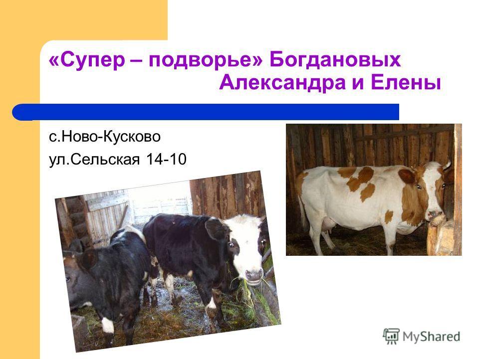 «Супер – подворье» Богдановых Александра и Елены с.Ново-Кусково ул.Сельская 14-10