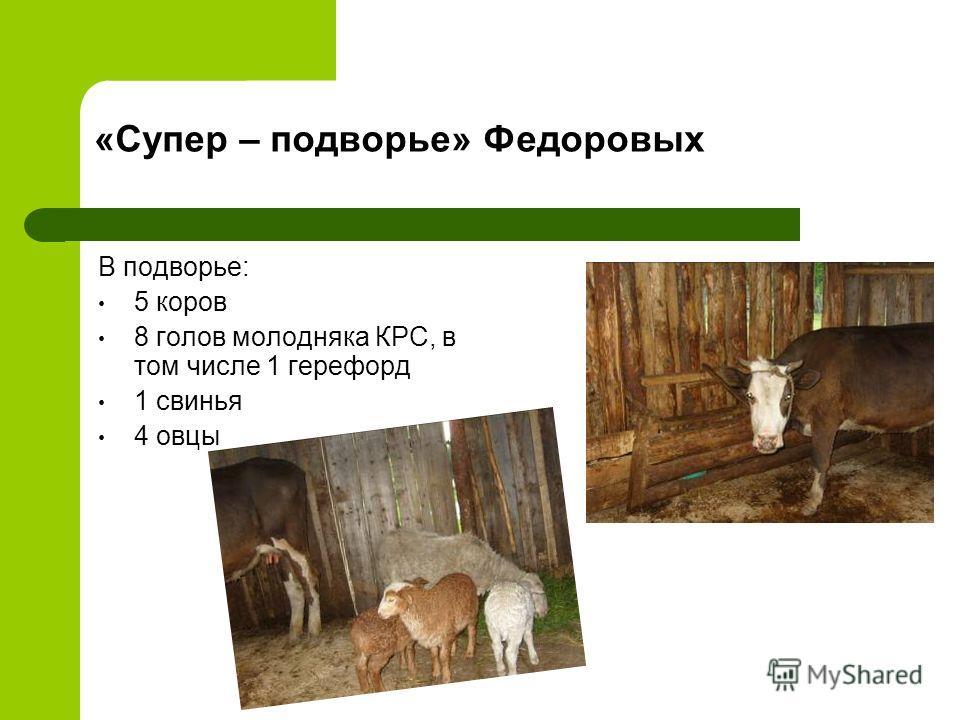 «Супер – подворье» Федоровых В подворье: 5 коров 8 голов молодняка КРС, в том числе 1 герефорд 1 свинья 4 овцы