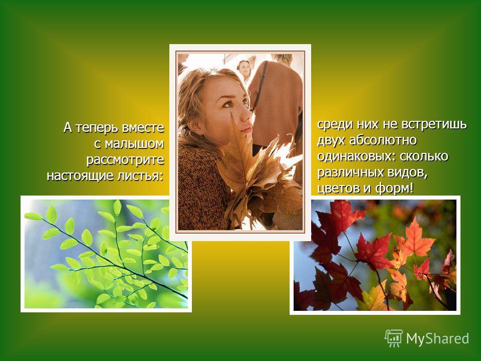 среди них не встретишь двух абсолютно одинаковых: сколько различных видов, цветов и форм! среди них не встретишь двух абсолютно одинаковых: сколько различных видов, цветов и форм! А теперь вместе с малышом рассмотрите настоящие листья: