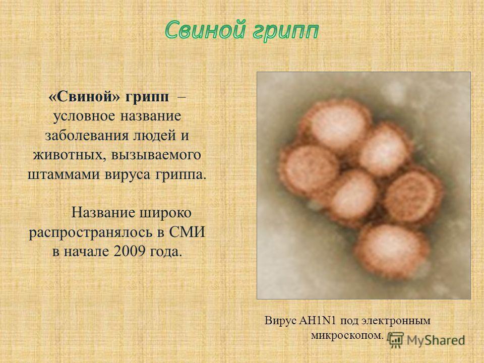 Вирус AH1N1 под электронным микроскопом. «Свиной» грипп – условное название заболевания людей и животных, вызываемого штаммами вируса гриппа. Название широко распространялось в СМИ в начале 2009 года.