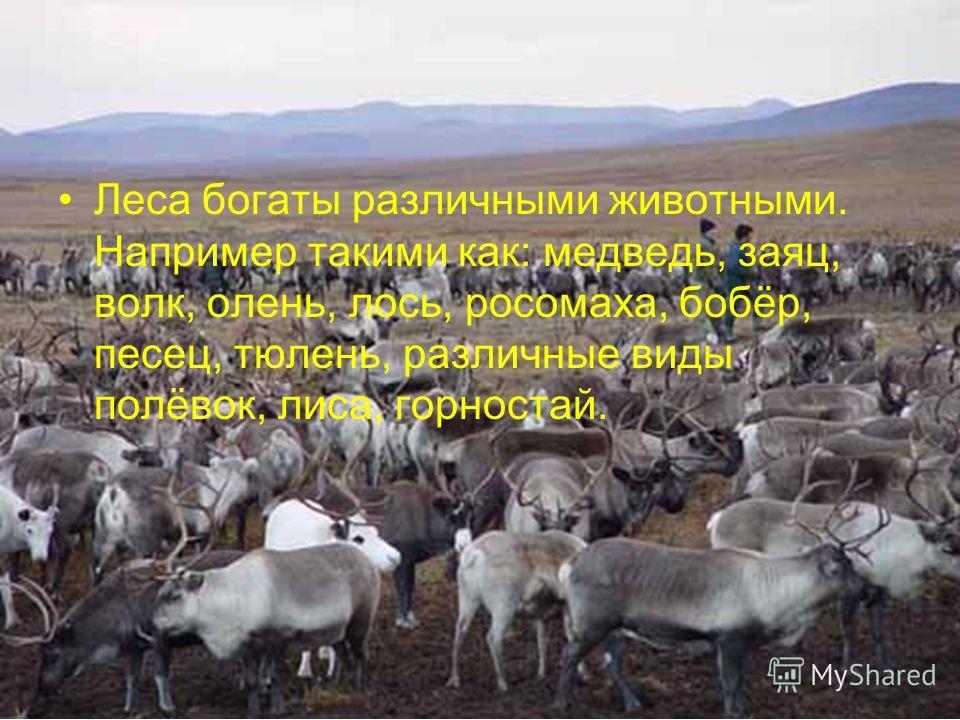 Леса богаты различными животными. Например такими как: медведь, заяц, волк, олень, лось, росомаха, бобёр, песец, тюлень, различные виды полёвок, лиса, горностай.