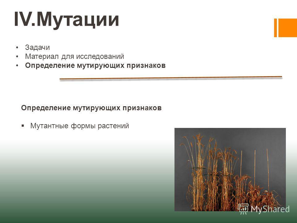 IV.Мутации Задачи Материал для исследований Определение мутирующих признаков Мутантные формы растений