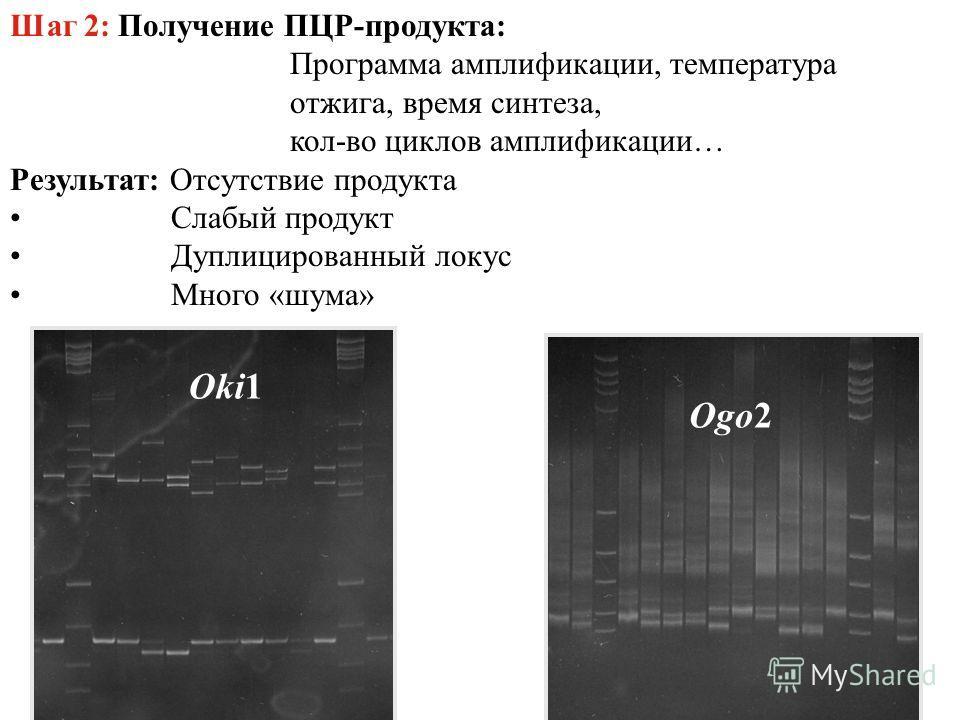 Шаг 2: Получение ПЦР-продукта: Программа амплификации, температура отжига, время синтеза, кол-во циклов амплификации… Результат: Отсутствие продукта Слабый продукт Дуплицированный локус Много «шума» Ogo2 Oki1