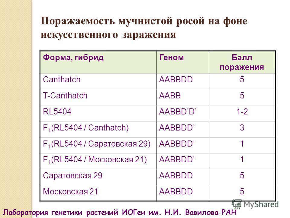 Поражаемость мучнистой росой на фоне искусственного заражения Форма, гибридГеномБалл поражения CanthatchAABBDD5 T-CanthatchAABB5 RL5404AABBDD1-2 F 1 (RL5404 / Canthatch)AABBDD3 F 1 (RL5404 / Саратовская 29)AABBDD1 F 1 (RL5404 / Московская 21)AABBDD1