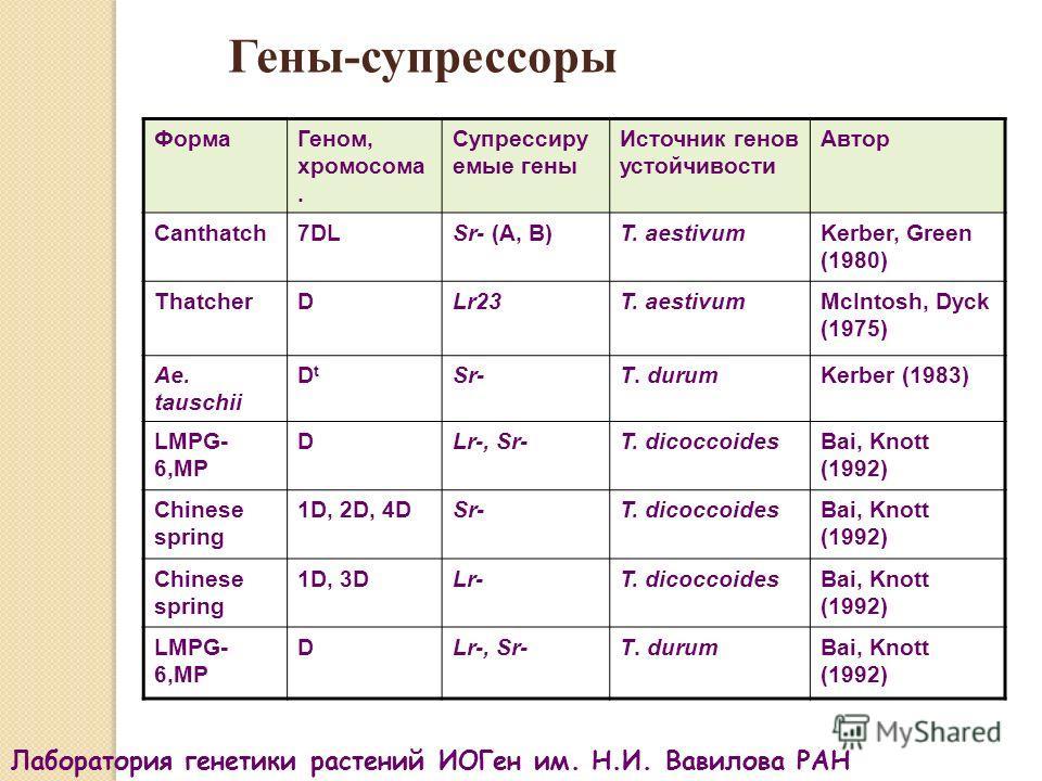 Гены-супрессоры ФормаГеном, хромосома. Супрессиру емые гены Источник генов устойчивости Автор Canthatch7DLSr- (A, B)T. aestivumKerber, Green (1980) ThatcherDLr23T. aestivumMcIntosh, Dyck (1975) Ae. tauschii DtDt Sr-T. durumKerber (1983) LMPG- 6,MP DL