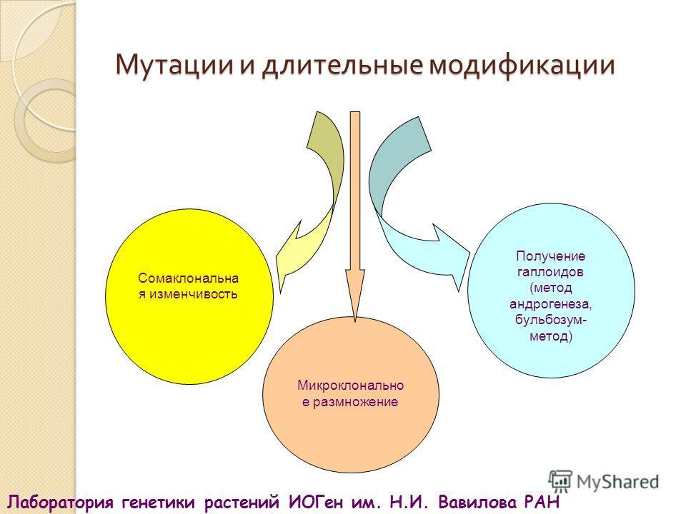 Получение гаплоидов (метод андрогенеза, бульбозум- метод) Микроклонально е размножение Сомаклональна я изменчивость Мутации и длительные модификации