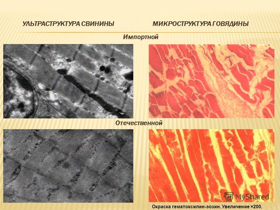 УЛЬТРАСТРУКТУРА СВИНИНЫМИКРОСТРУКТУРА ГОВЯДИНЫ Импортной Отечественной Окраска гематоксилин-эозин. Увеличение ×200.