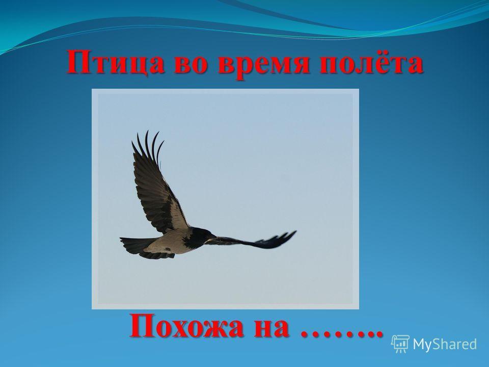 Птица во время полёта Похожа на ……..