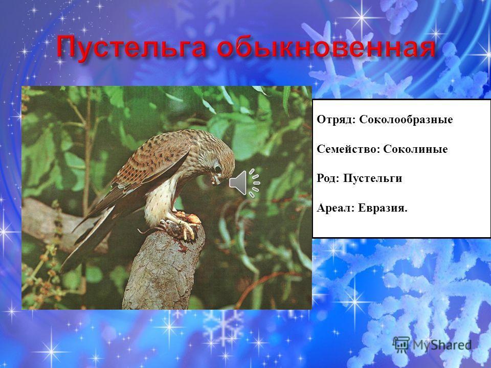 Отряд: Соколообразные Семейство: Соколиные Род: Пустельги Ареал: Евразия.