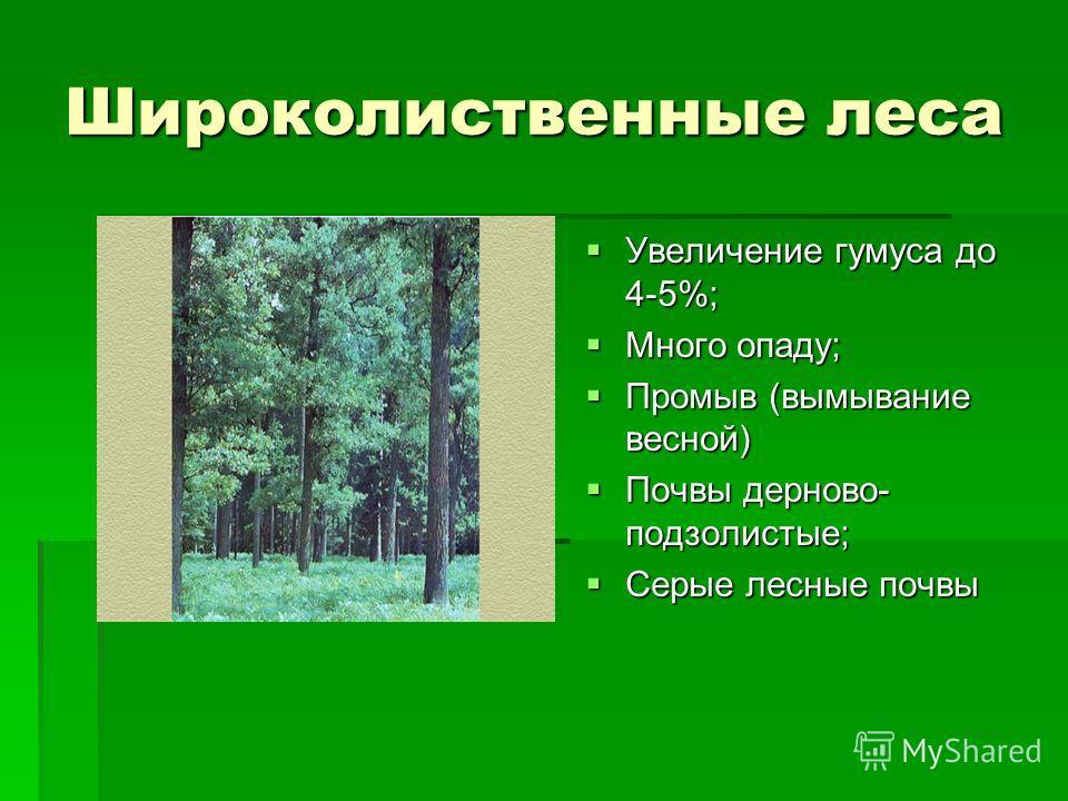 Широколиственные леса Увеличение гумуса до 4-5%; Увеличение гумуса до 4-5%; Много опаду; Много опаду; Промыв (вымывание весной) Промыв (вымывание весной) Почвы дерново- подзолистые; Почвы дерново- подзолистые; Серые лесные почвы Серые лесные почвы