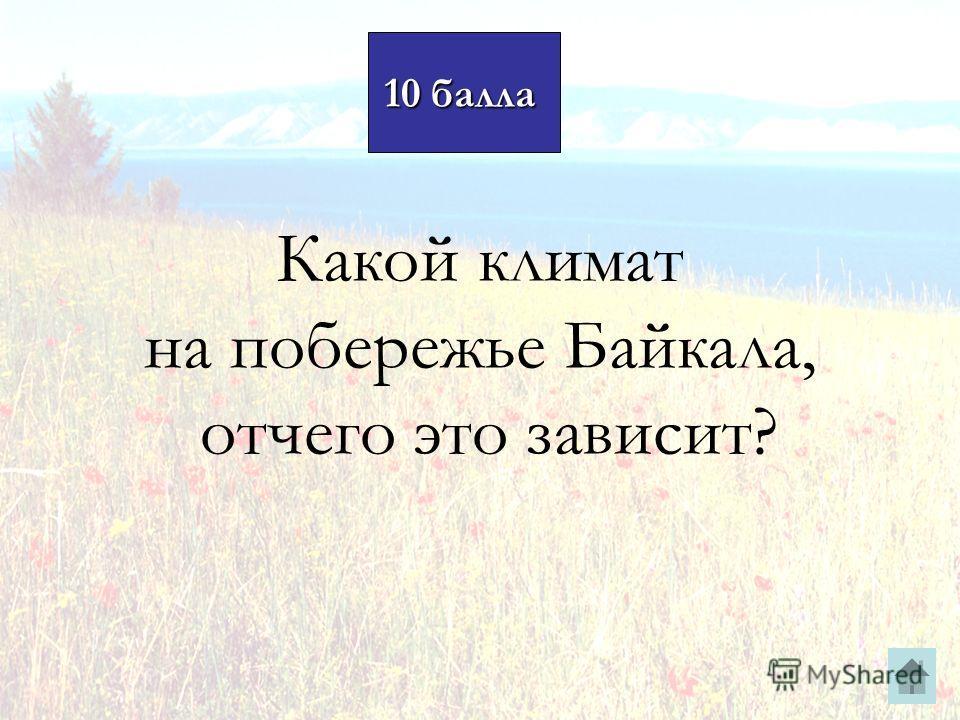 10 балла 10 балла Какой климат на побережье Байкала, отчего это зависит?