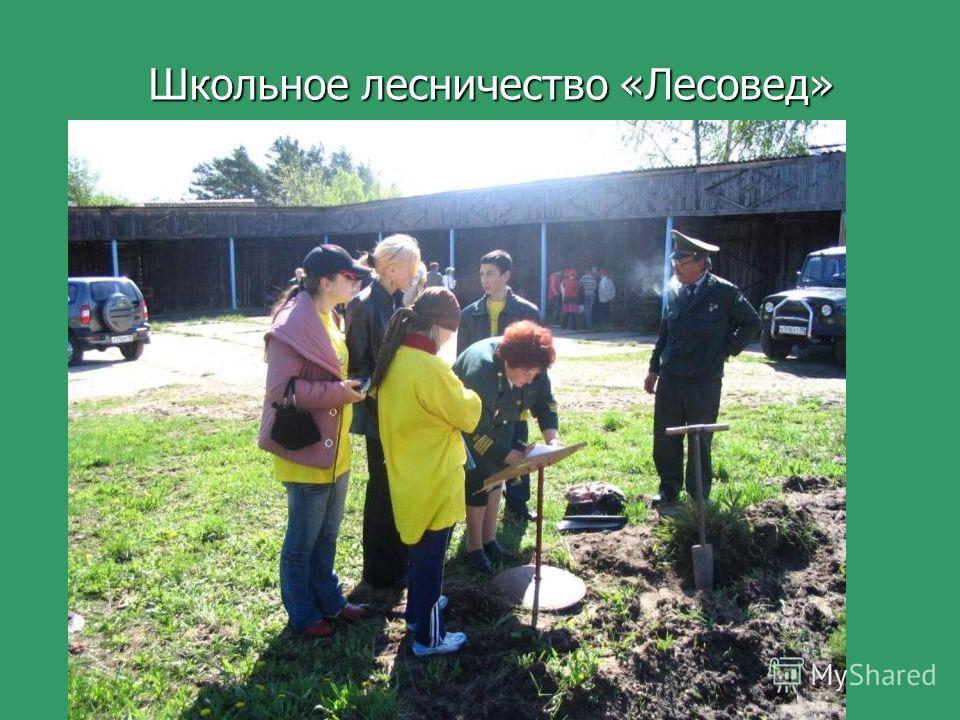 15 Школьное лесничество «Лесовед»