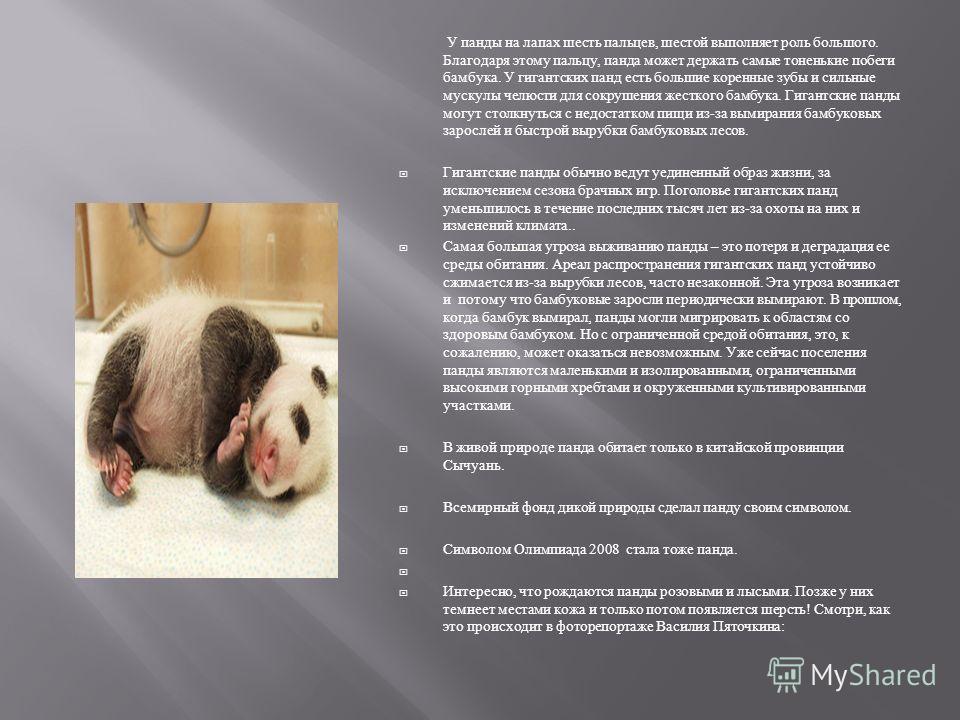 Гигантская панда весит от 70 до 125 кг. Она обитает в лесах с плотными зарослями бамбука на склонах гор на высотах от 2700 до 3900 м. Панда не строит постоянное логово, а находит убежище в полых стволах деревьев, расщелинах скал и пещерах. Живет она