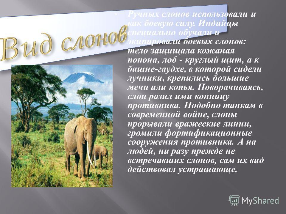 Самые известные из вымерших хоботных - мамонты - появились на Земле примерно 150 тыс. лет назад. Виды этого рода были единственными хоботными, покрытыми шерстью, поскольку, в отличие от своих родственников, обитали в условиях сурового климата. Огромн