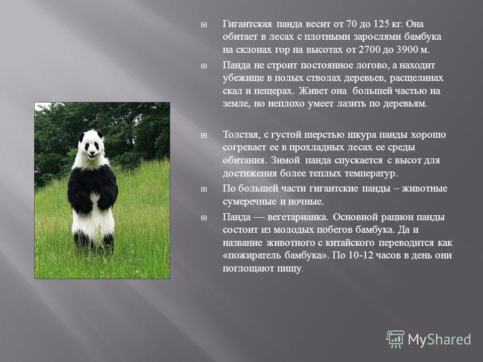 У гигантской черно - белой панды тело типичное для медведей. У нее есть черный мех на ушах, вокруг глаз, на морде, ногах, и плечах. Остальная часть шкуры животного белая. Хотя ученые не знают, почему эти медведи необычного черно - белого цвета, некот