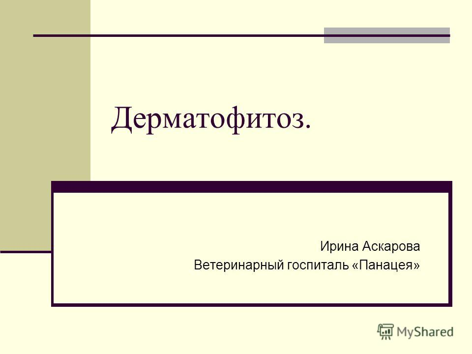 Дерматофитоз. Ирина Аскарова Ветеринарный госпиталь «Панацея»