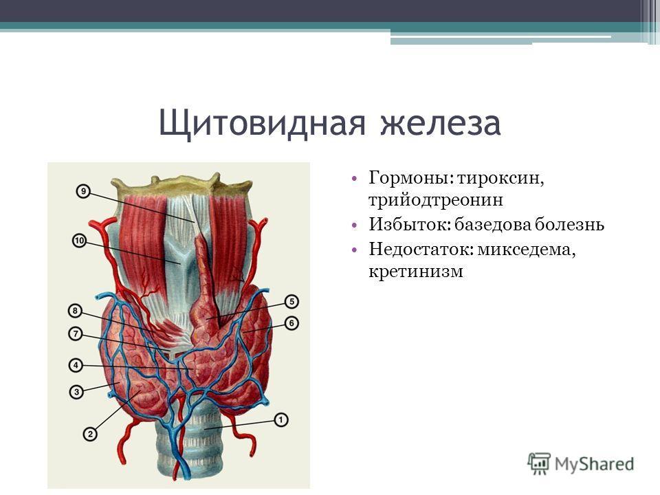 Щитовидная железа Гормоны: тироксин, трийодтреонин Избыток: базедова болезнь Недостаток: микседема, кретинизм