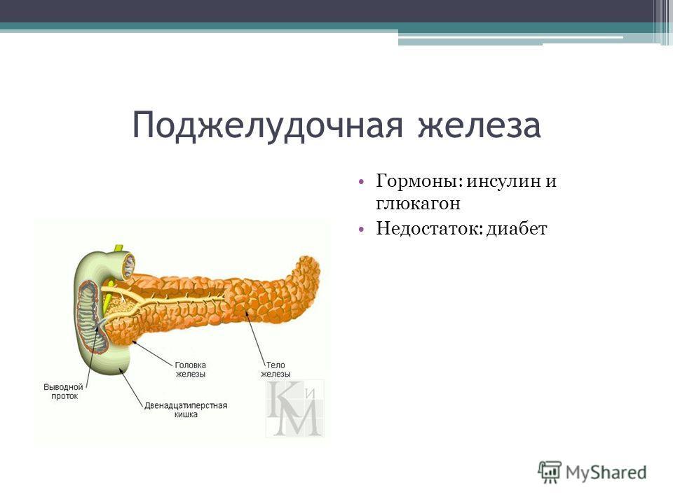 Поджелудочная железа Гормоны: инсулин и глюкагон Недостаток: диабет