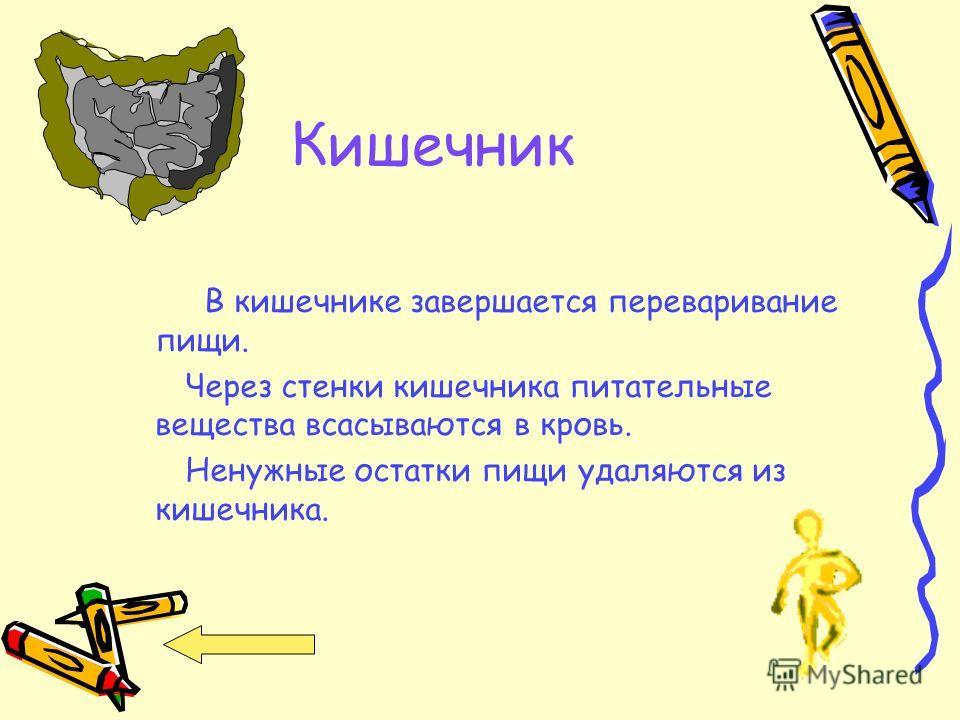 Желудок Желудок переваривает пищу, чтобы получить необходимые для жизни человека вещества.