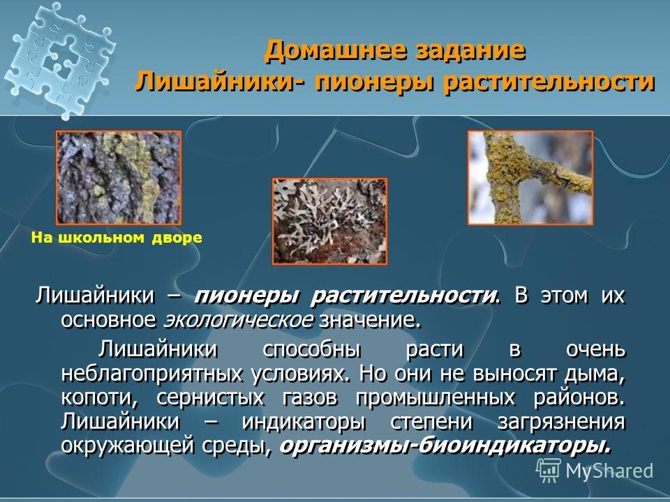 Домашнее задание Лишайники- пионеры растительности Лишайники – пионеры растительности. В этом их основное экологическое значение. Лишайники способны расти в очень неблагоприятных условиях. Но они не выносят дыма, копоти, сернистых газов промышленных