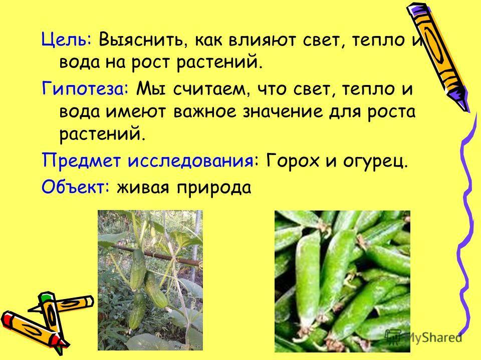 Цель: Выяснить, как влияют свет, тепло и вода на рост растений. Гипотеза: Мы считаем, что свет, тепло и вода имеют важное значение для роста растений. Предмет исследования: Горох и огурец. Объект: живая природа