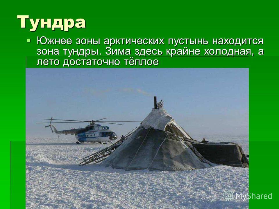Тундра Южнее зоны арктических пустынь находится зона тундры. Зима здесь крайне холодная, а лето достаточно тёплое Южнее зоны арктических пустынь находится зона тундры. Зима здесь крайне холодная, а лето достаточно тёплое