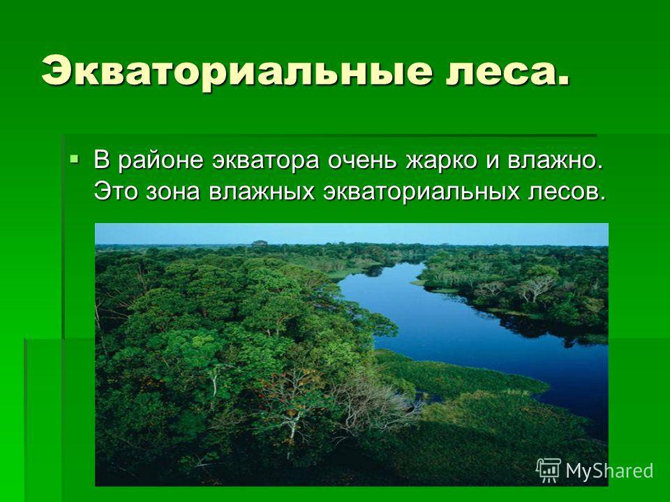 Экваториальные леса. В районе экватора очень жарко и влажно. Это зона влажных экваториальных лесов. В районе экватора очень жарко и влажно. Это зона влажных экваториальных лесов.