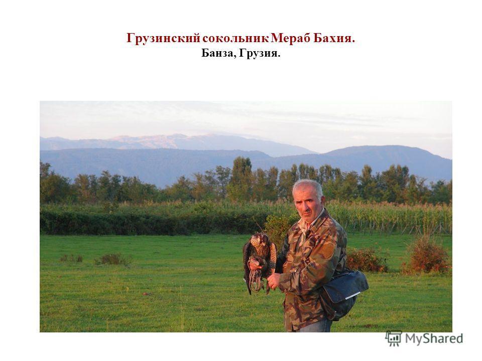 Грузинский сокольник Мераб Бахия. Банза, Грузия.