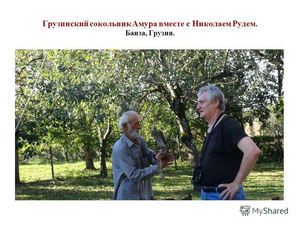 Грузинский сокольник Амура вместе с Николаем Рудем. Банза, Грузия.