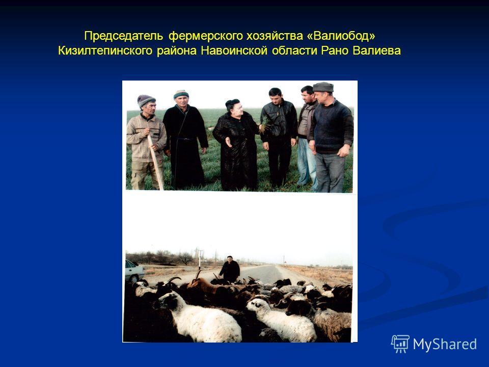 Председатель фермерского хозяйства «Валиобод» Кизилтепинского района Навоинской области Рано Валиева