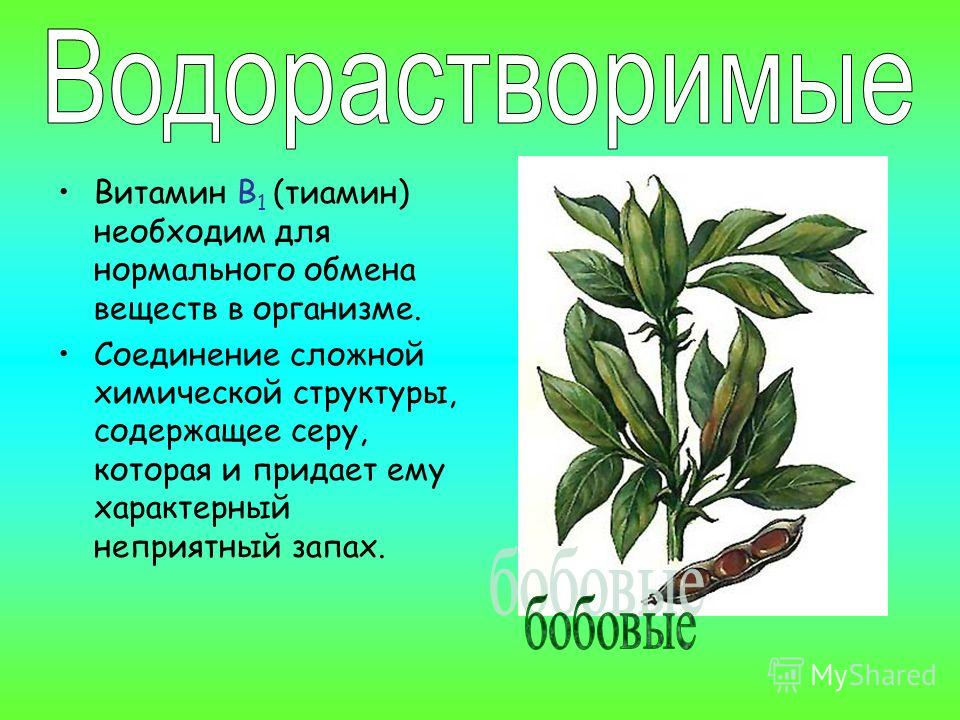 Витамин В 1 (тиамин) необходим для нормального обмена веществ в организме. Соединение сложной химической структуры, содержащее серу, которая и придает ему характерный неприятный запах.