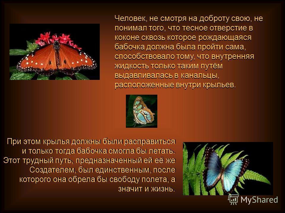 Человек, не смотря на доброту свою, не понимал того, что тесное отверстие в коконе сквозь которое рождающаяся бабочка должна была пройти сама, способствовало тому, что внутренняя жидкость только таким путём выдавливалась в канальцы, расположенные вну