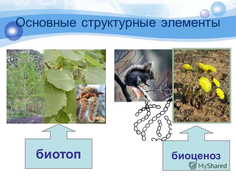 Основные структурные элементы биоценоз биотоп