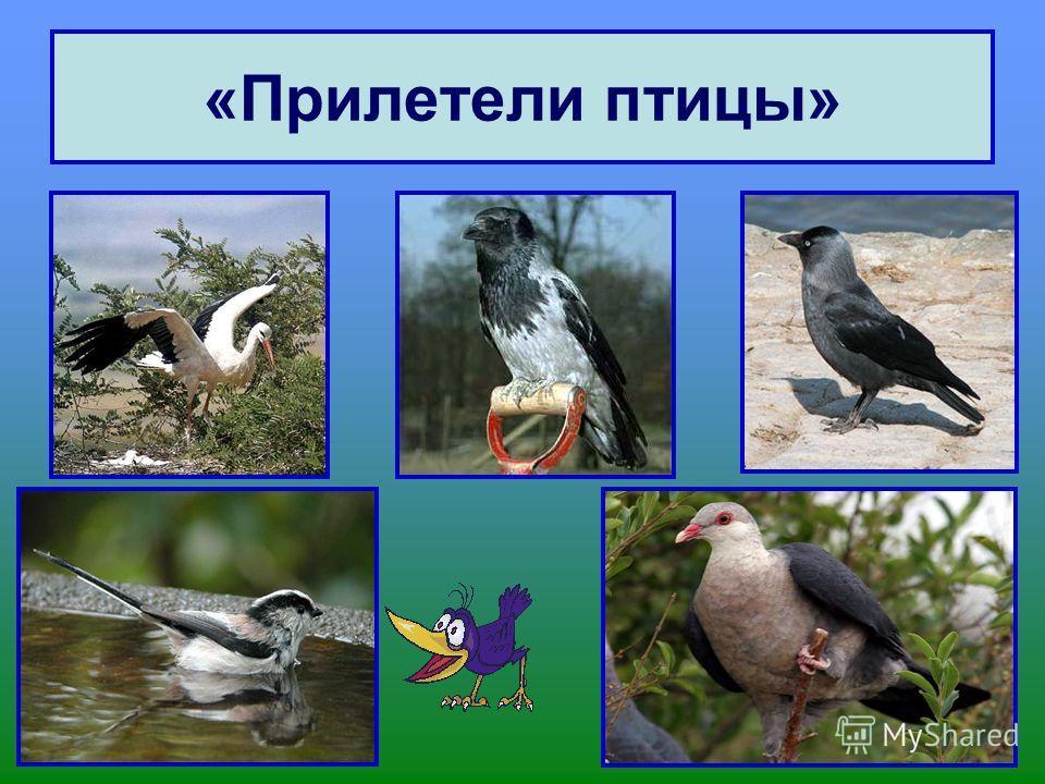 «Прилетели птицы»