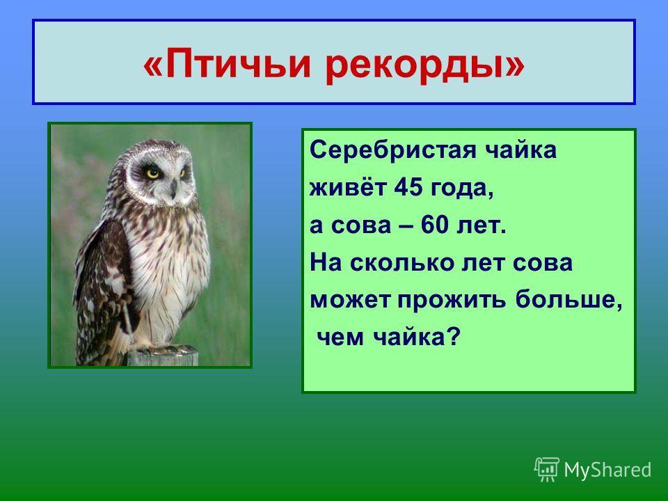 «Птичьи рекорды» Серебристая чайка живёт 45 года, а сова – 60 лет. На сколько лет сова может прожить больше, чем чайка?