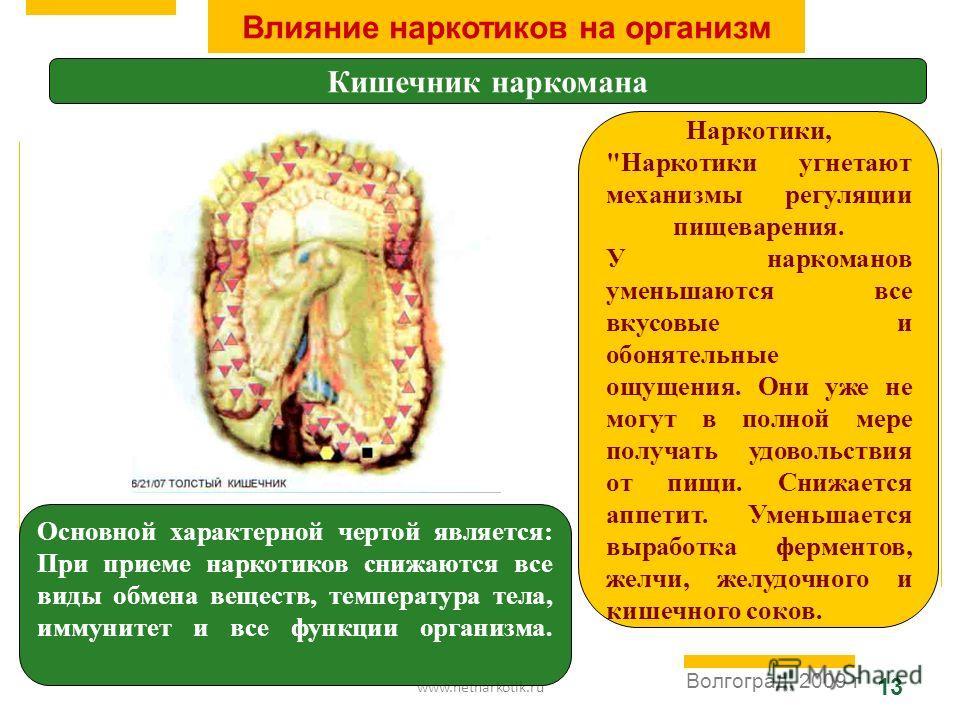 www.netnarkotik.ru 13 Волгоград, 2009 г Влияние наркотиков на организм Кишечник наркомана Основной характерной чертой является: При приеме наркотиков снижаются все виды обмена веществ, температура тела, иммунитет и все функции организма. Наркотики,