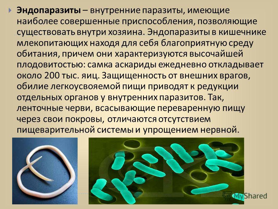 виды червей паразитов у человека фото