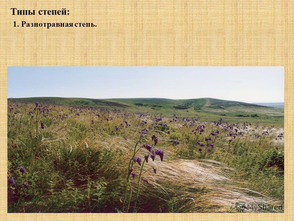 Типы степей: 1. Разнотравная степь.