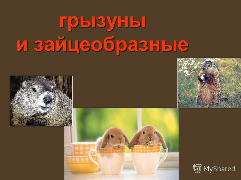 грызуны и зайцеобразные