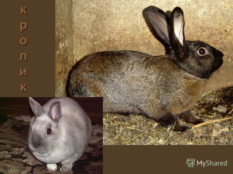 кроликкроликкроликкролик