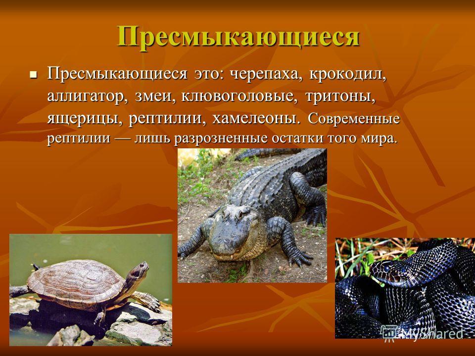 Пресмыкающиеся Пресмыкающиеся это: черепаха, крокодил, аллигатор, змеи, клювоголовые, тритоны, ящерицы, рептилии, хамелеоны. Современные рептилии лишь разрозненные остатки того мира. Пресмыкающиеся это: черепаха, крокодил, аллигатор, змеи, клювоголов