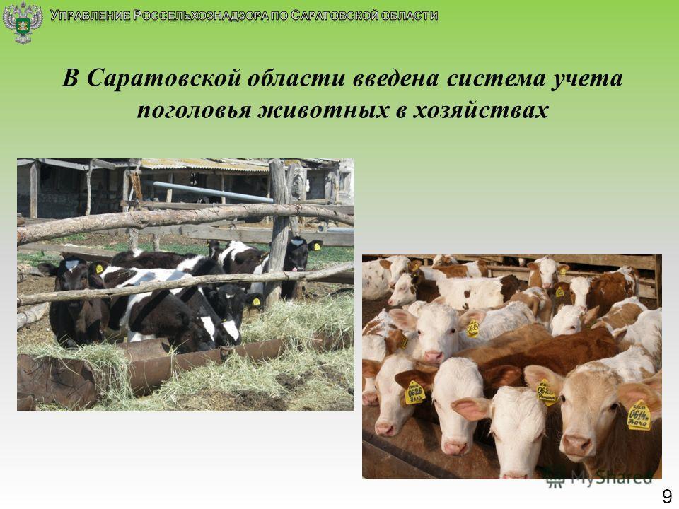 В Саратовской области введена система учета поголовья животных в хозяйствах 9