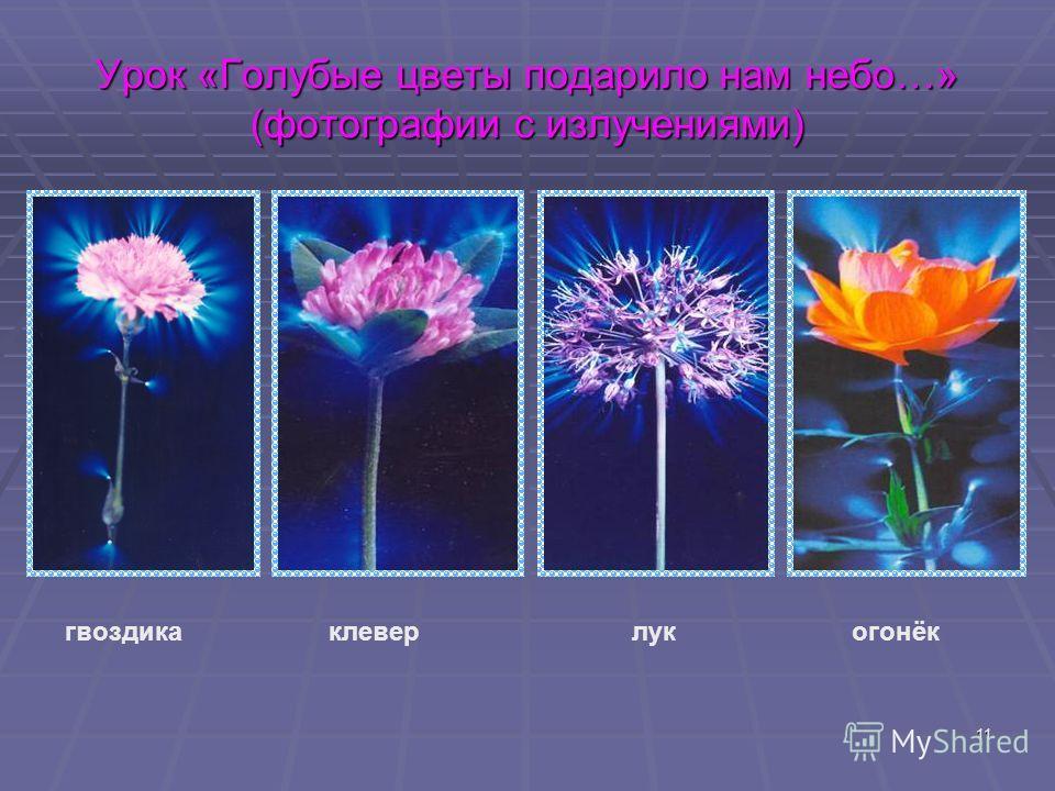 11 Урок «Голубые цветы подарило нам небо…» (фотографии с излучениями) гвоздика клевер лук огонёк