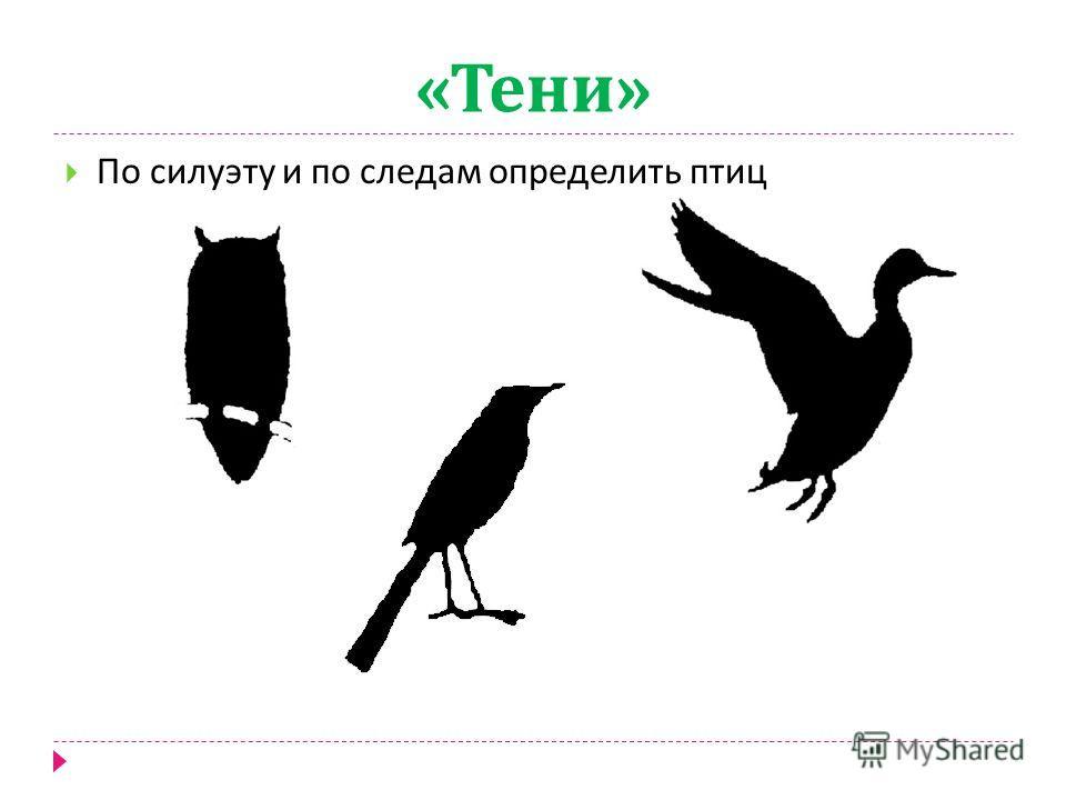 « Тени » По силуэту определить птиц