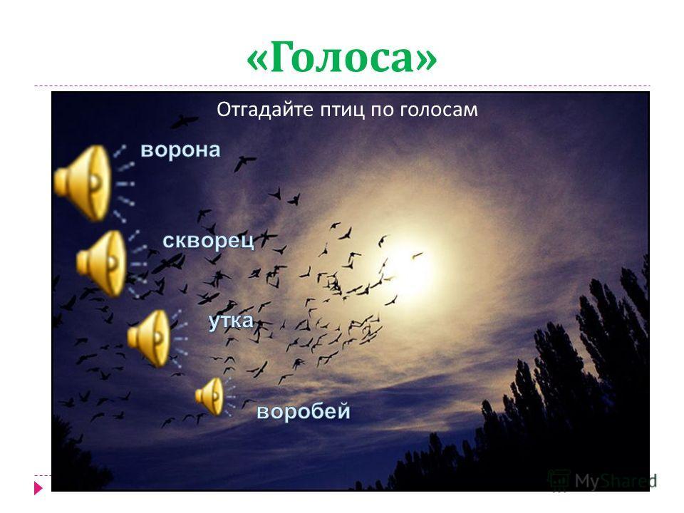 « Тени » По силуэту и по следам определить птиц
