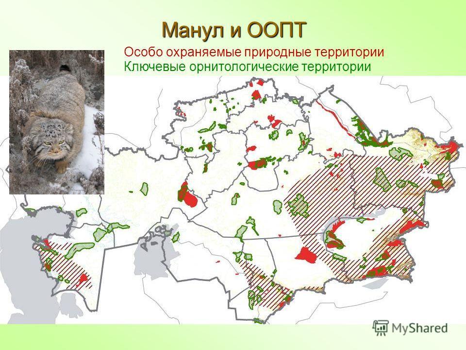 Манул и ООПТ Особо охраняемые природные территории Ключевые орнитологические территории