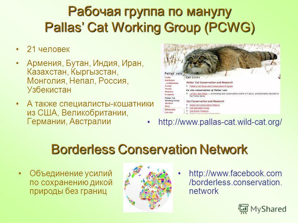 Рабочая группа по манулу Pallas Cat Working Group (PCWG) 21 человек Армения, Бутан, Индия, Иран, Казахстан, Кыргызстан, Монголия, Непал, Россия, Узбекистан А также специалисты-кошатники из США, Великобритании, Германии, Австралии http://www.facebook.