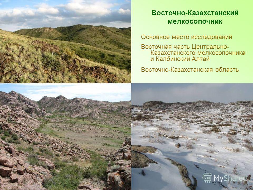 Основное место исследований Восточная часть Центрально- Казахстанского мелкосопочника и Калбинский Алтай Восточно-Казахстанская область Восточно-Казахстанский мелкосопочник